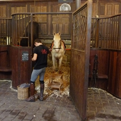 Visit Academy of equestrian arts
